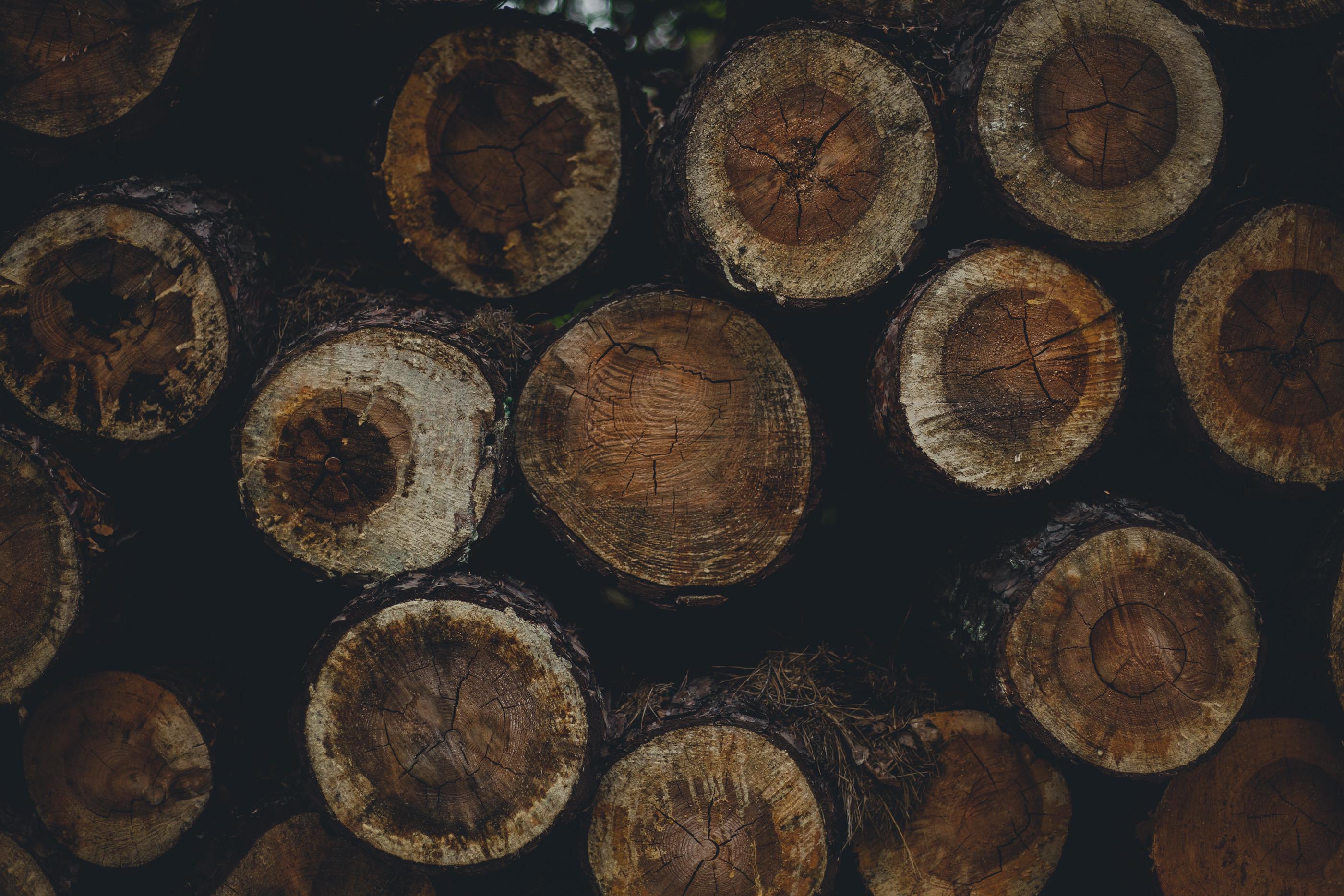 Sesja ślubna w lesie Legionowo