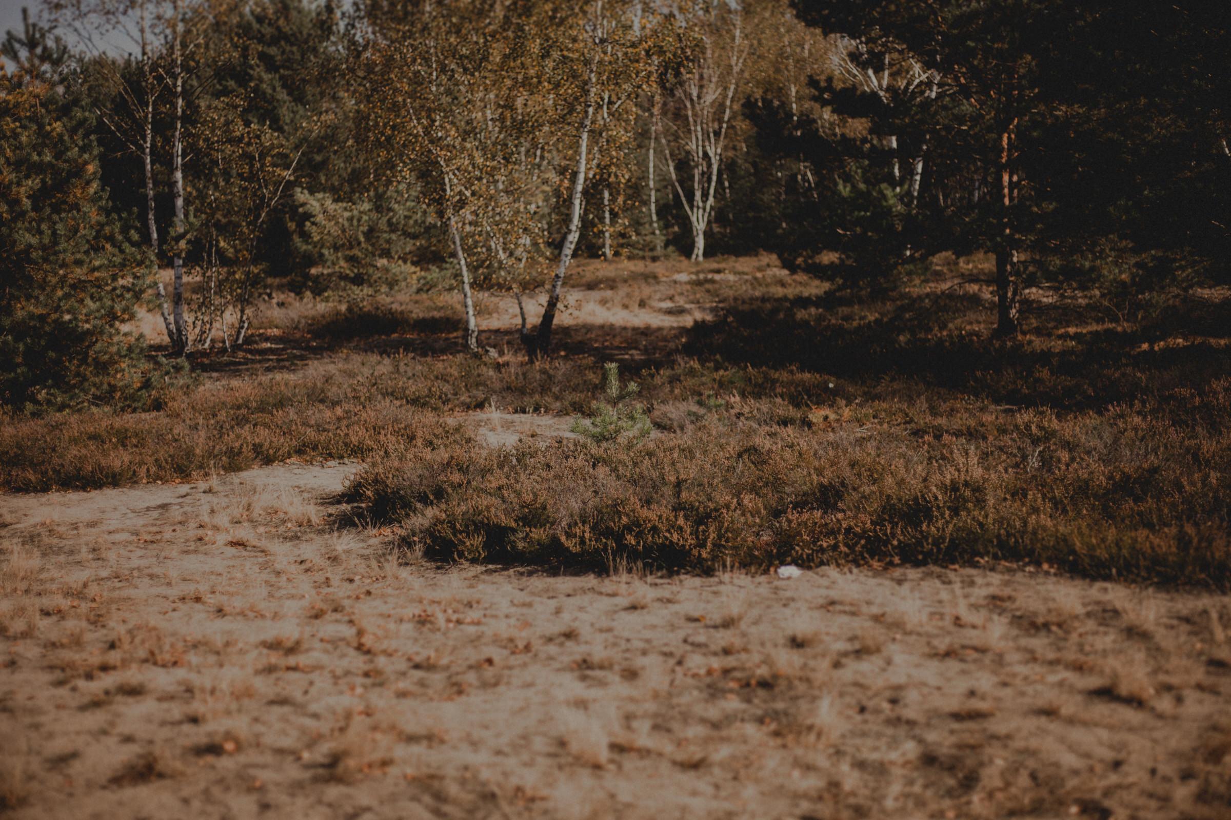las wyszków