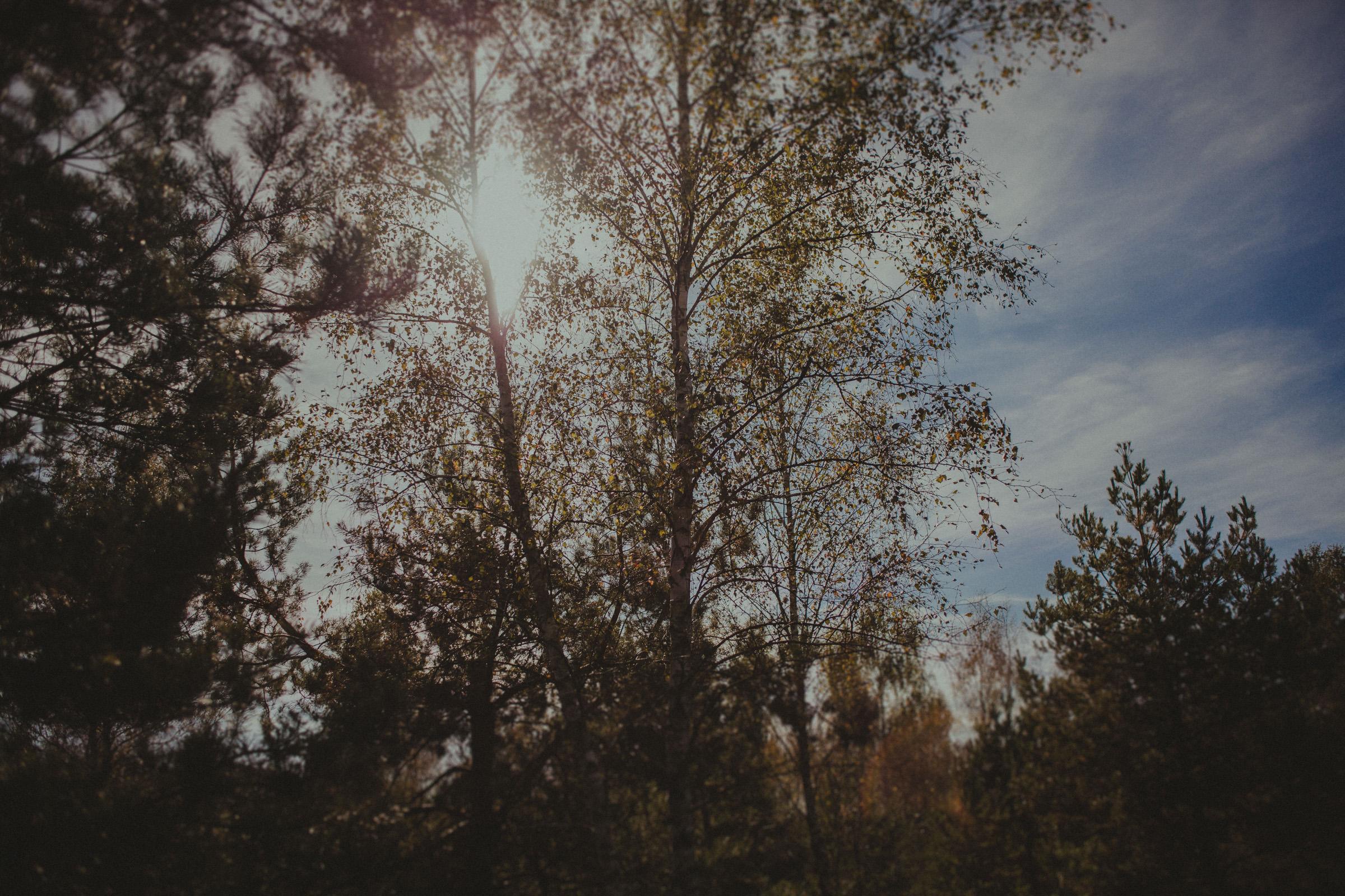 jesienne słońce