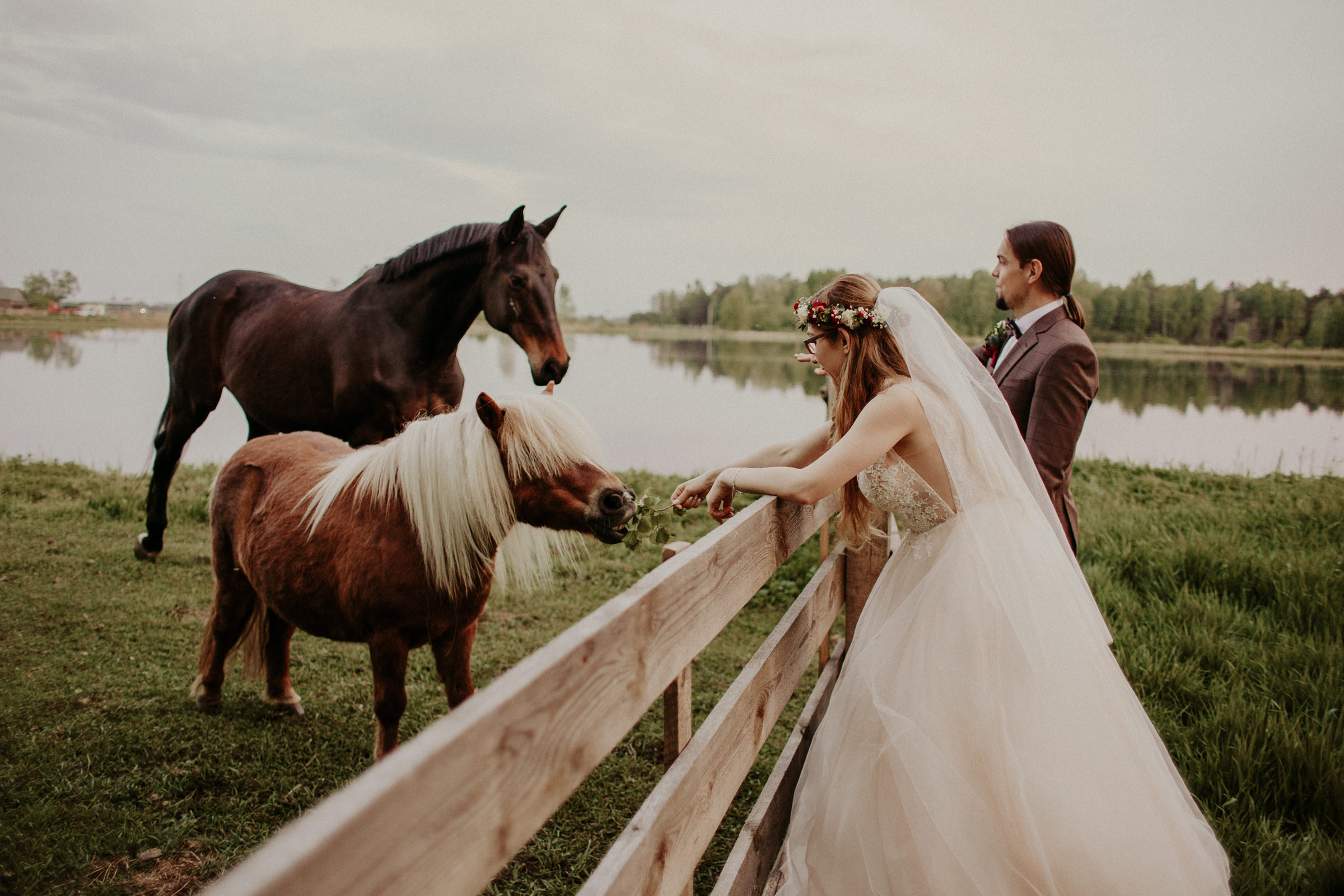 sesja z koniami