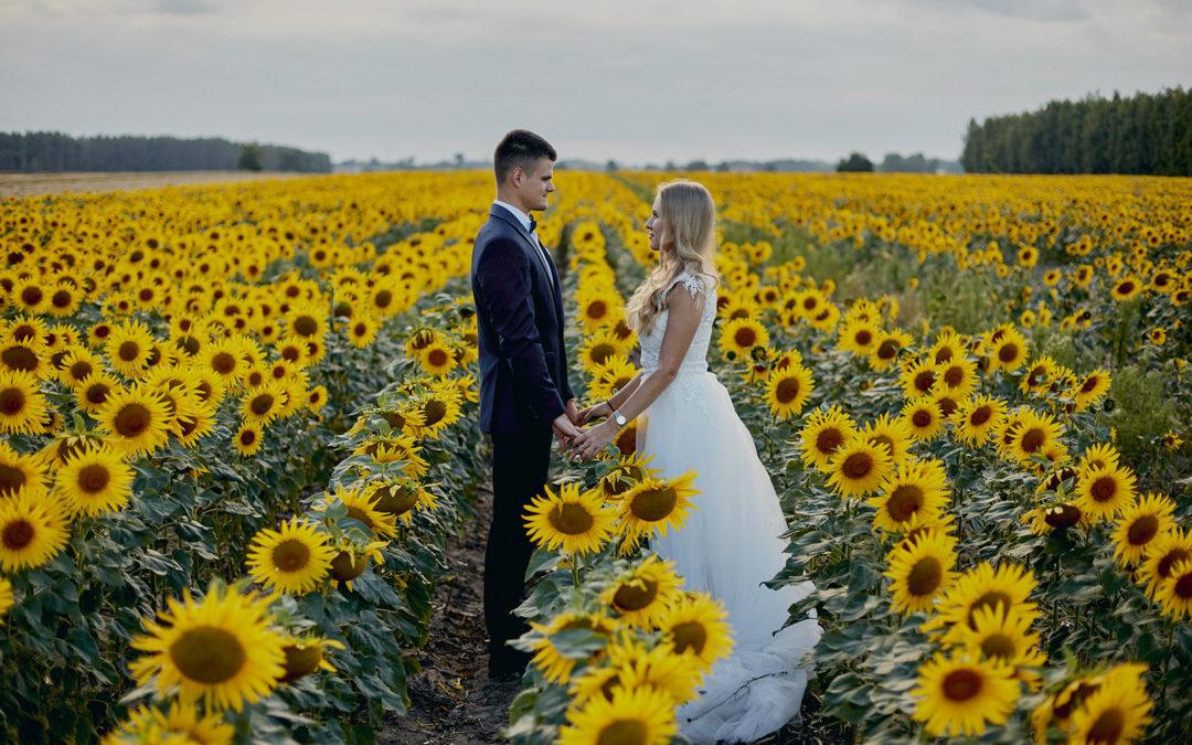 Sesja ślubna w zbożu i słonecznikach – Joanna i Rafał