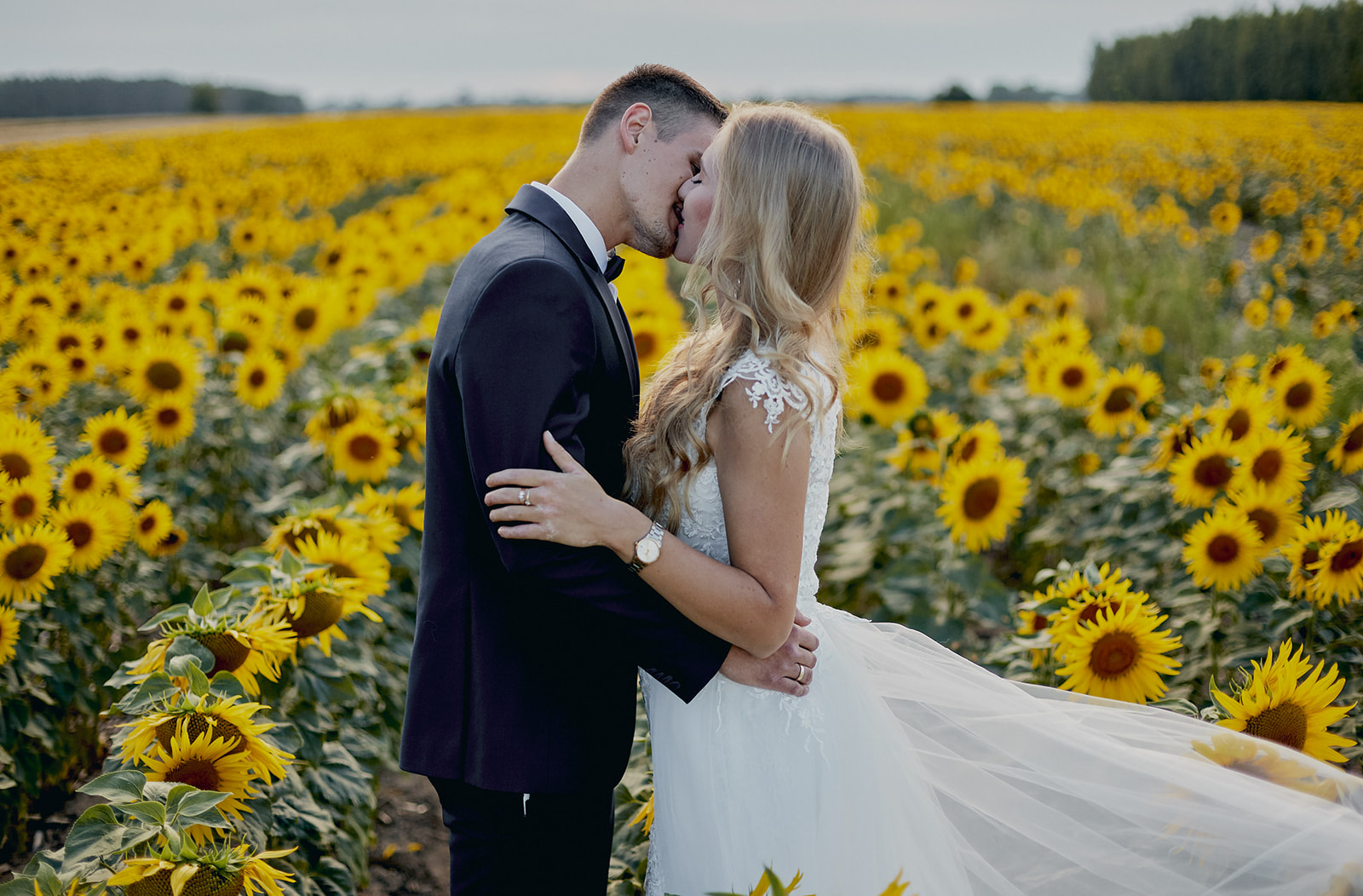 Sesja ślubna w zbożu i słonecznikach - Joanna i Rafał