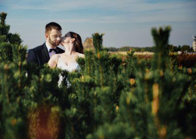sesja ślubna w choinkach