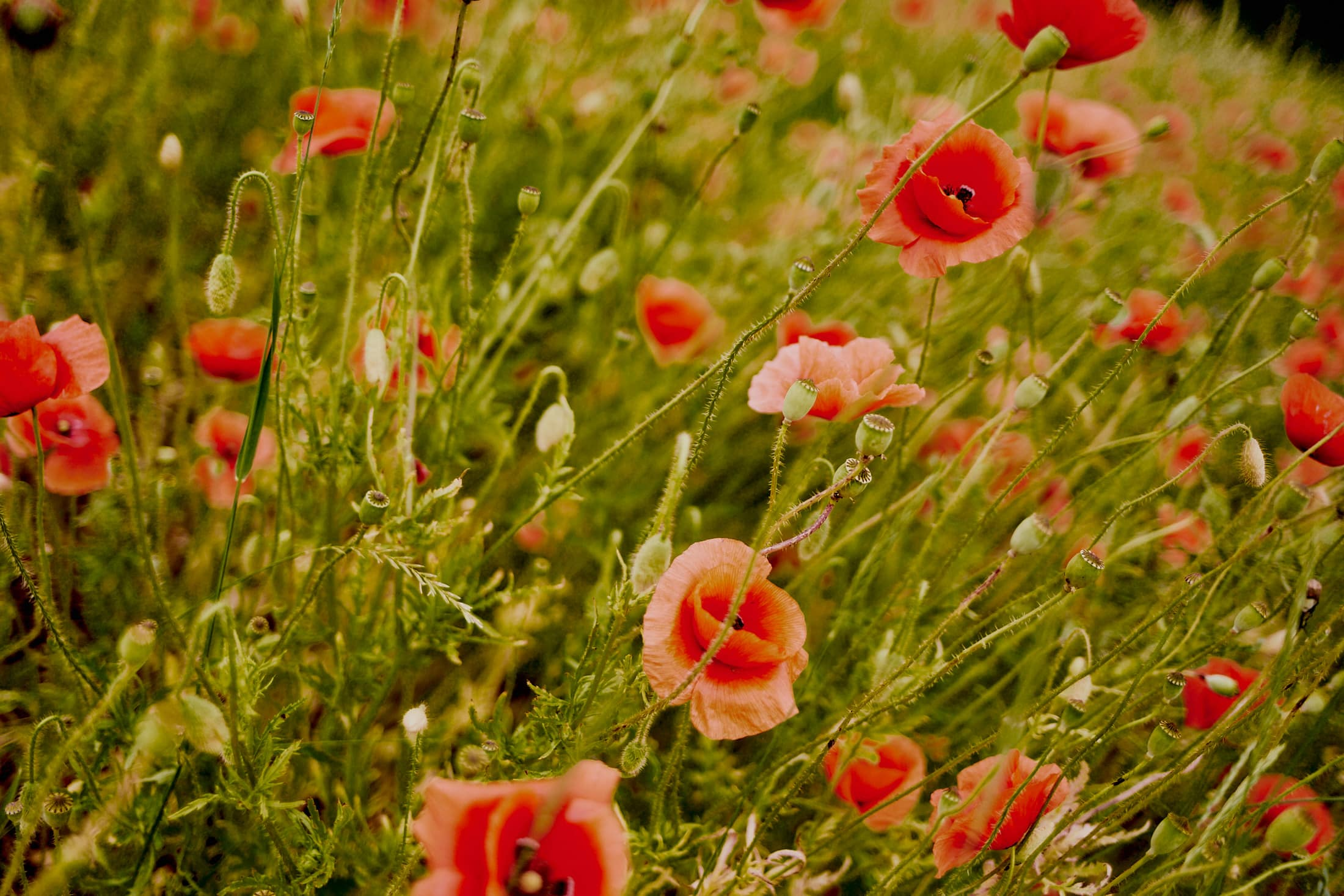 Pełna kwiatów, miłości i uśmiechu sesja przed ślubem