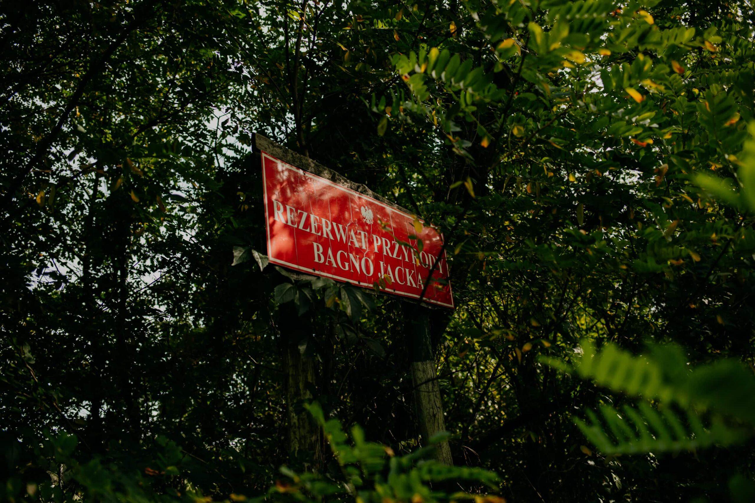 Rezerwat przyrody Bagno Jacka Sesja ślubna